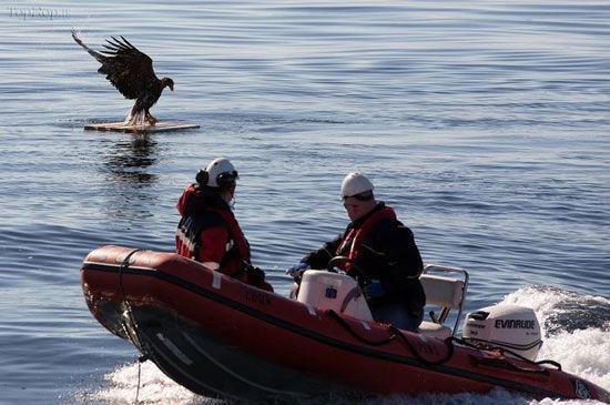 نجات عقاب در حال غرق شدن +عکس